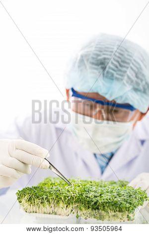 Examining green plant