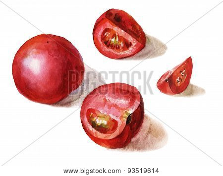 Vector Watercolor Whole And Sliced Tomatos Isolated On White Background