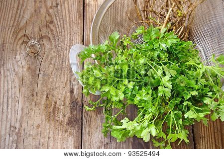 Organic Parsley With Roots In Basket