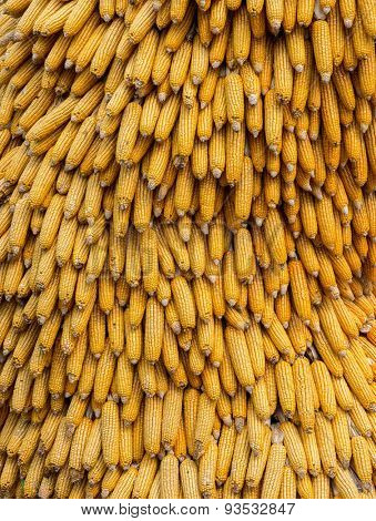 dry corn cobs natural background