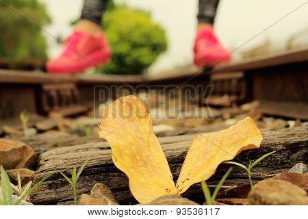 Leaves On Rails