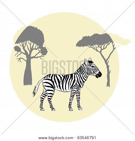 Zebra between savanna trees