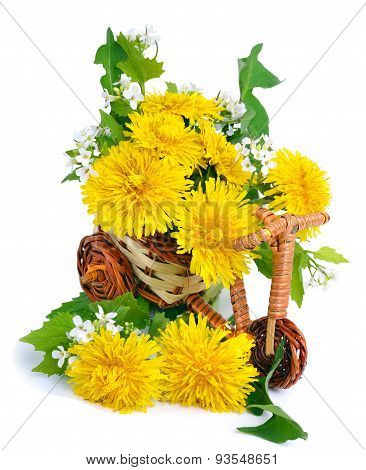 Dandelions Decoration In The Toy Bicycle Isolated On White