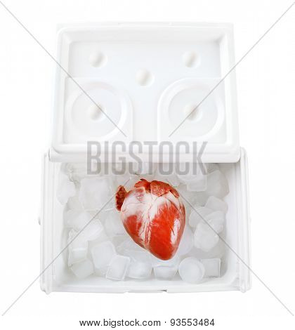 Heart organ in fridge isolated on white