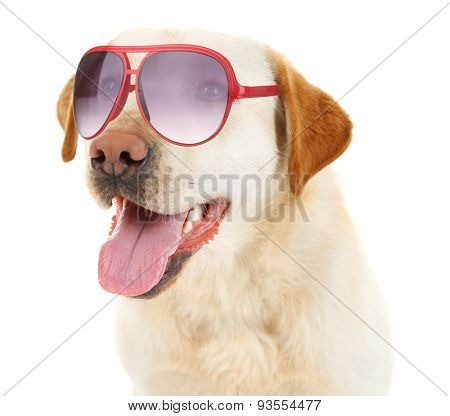 Cute dog with sunglasses isolated on white
