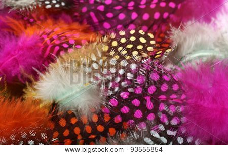 Colorful feathers on pile