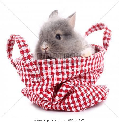 Cute little rabbit bunny in red plaid bag
