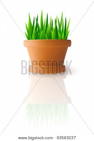 Fresh green grass in flowerpot