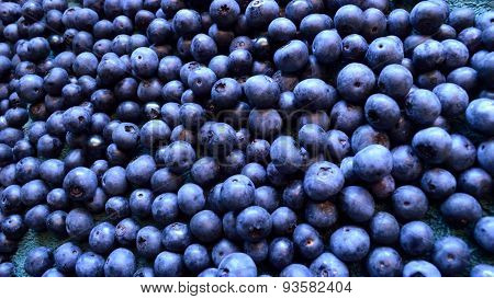 Panorama Organic Blueberry Background