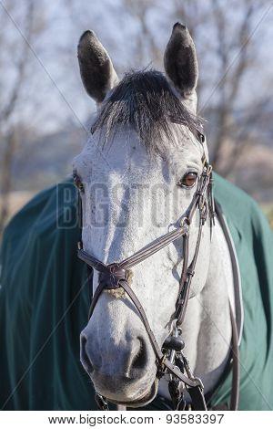 Horse Portrait Detail