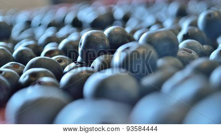 Blurred Blueberry Widescreen Background