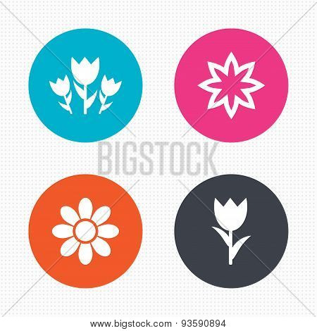 Flowers icons. Bouquet of roses symbol.