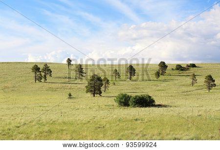 Lush Green Meadow