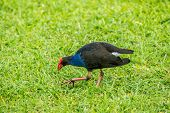 foto of grass bird  - A water bird - JPG