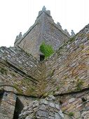 image of irish moss  - central tower of jerpoint abbey in ireland - JPG