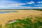 image of grass area  - Reed grass backwater area under blue sky with clouds aerial view - JPG