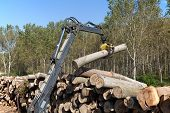 stock photo of skidder  - Crane with jaws loading logs onto a stack - JPG