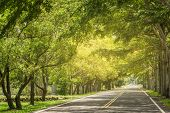 stock photo of tree lined street  - Landscape of straight road under the trees - JPG