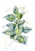 image of sting  - vector watercolor illustration of a bush of stinging nettles - JPG