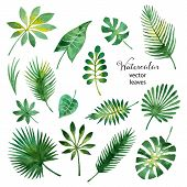 pic of isolator  - Set of watercolor green leaves isolated on white background vector illustration - JPG