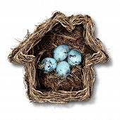 picture of bird egg  - Home insurance concept and family security symbol as a bird nest shaped as a house with a group of fragile eggs inside as a metaphor for protection of residence or parenting - JPG