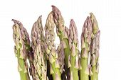 foto of white asparagus  - Fresh green spring asparagus isolated on white with copy space - JPG