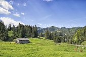 foto of bavaria  - Landscape near Spitzingsee with cows in the Alps in Bavaria Germany and free space in sky - JPG