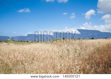 summer field with multiple energy photovoltaic solar panels and blue sky with clouds