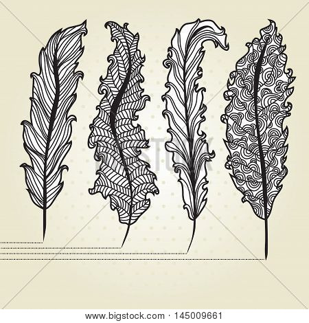 hand drawn decorative feathers for your design
