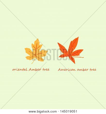 Isolated autumn leaves of the American Amber tree and the oriental Amber tree on a light blue background with lettering