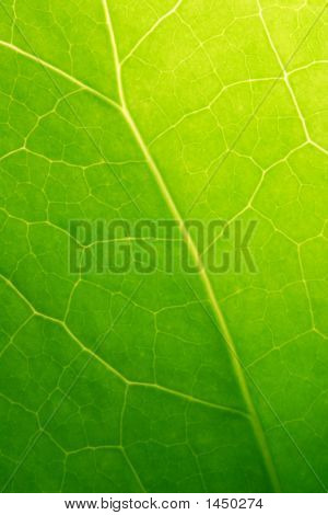 Green Leaf Macro