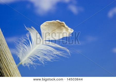 A light white feather in the wind, symbol of lightness, inspiration and freedom