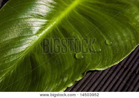 drei Tropfen frisch und sauber Wasser auf einem grünen Blatt über eine Zen schwarzer Hintergrund