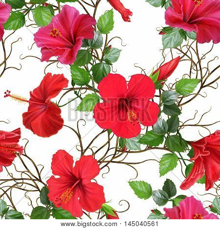 Pattern seamless. Old style. Weaving from twigs. Bright red hibiscus flowers rose. Isolated on white background.