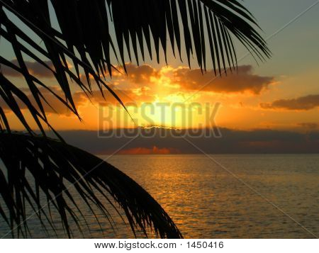 Palm Tree Sunset
