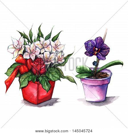 Watercolor alstroemeria rose orchid bouquets in pots