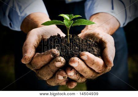 Mano de campesino que una planta joven fresca. Símbolo de nueva vida y conservación del medio ambiente