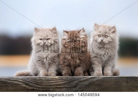 three adorable fluffy kittens posing outdoors together