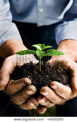 Mano de campesino que una planta joven fresca. Símbolo de nueva vida y conservación del medio ambiente. Espacio fo