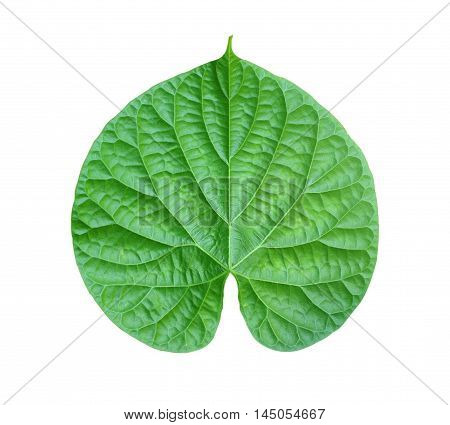 The Green leaves on a white background