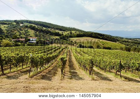 Holiday in the countryside on the hills visiting the vineyards of pallagrello typical and valuable wine produced in the province of Caserta in Campania region of Italy