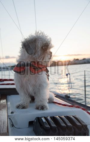 Shih-tzu Sailor