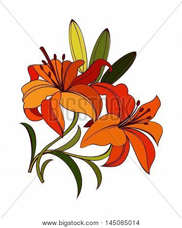 bright orange, scarlet lily flower with green leaves isolated on white background. decorative vector illustration with dark outline