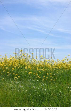 Bright Yellow Flowers Beneath The Light Blue Sky
