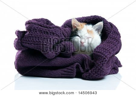 Adorable little kitten sleeping inside warm wool jumper isolated on white background