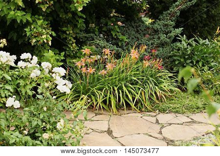 Yellow daylily against a background of a garden path of sandstone. Around is landscaping design.