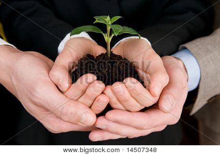 Group of business hands holding a fresh young sprout. Symbol of growing and green business
