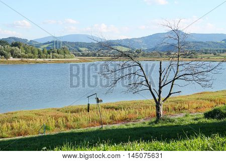 colorful plants on the bank and revealed bottom of drying dam on sunny autumn day and bare tree at the foreground