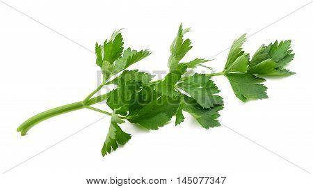 Green Celery Sprig