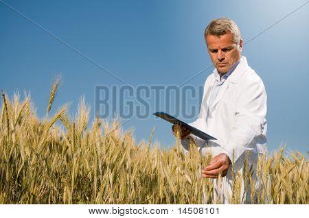 Técnico maduro sosteniendo y examinar un oído de trigo durante un control de calidad en campo